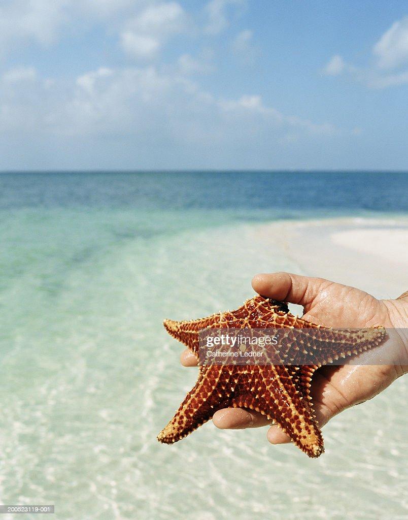 Hand holding starfish on beach : Stock Photo