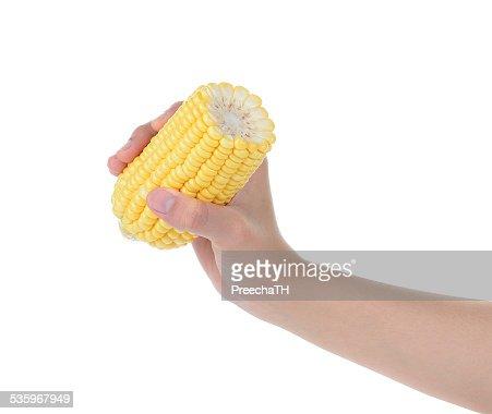 hand holding sweet corn isolate on white background : Stock Photo