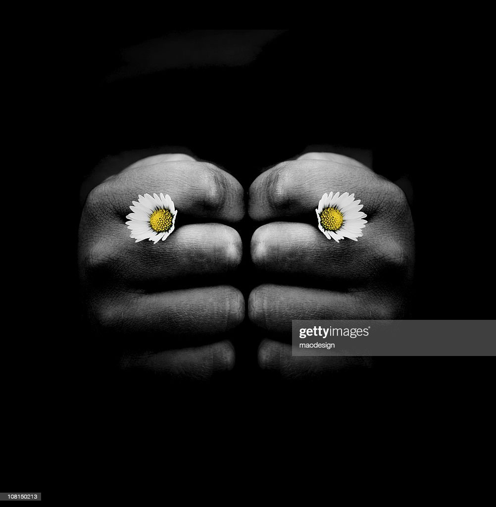 Hand Holding Two Small Daisy Flowers in Knuckles : Stock Photo