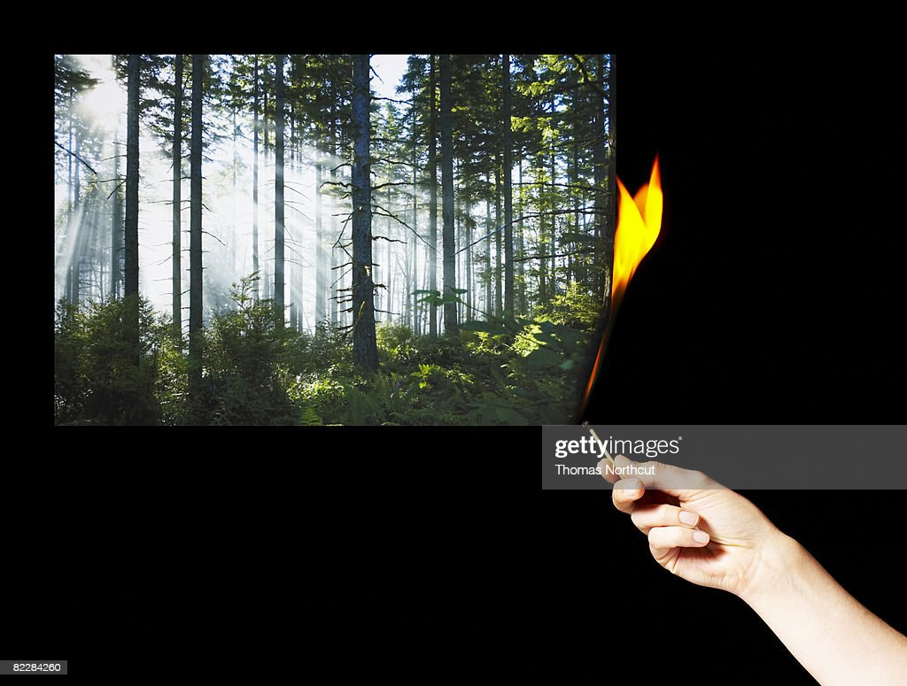 Hand lighting photograph of forest on fire