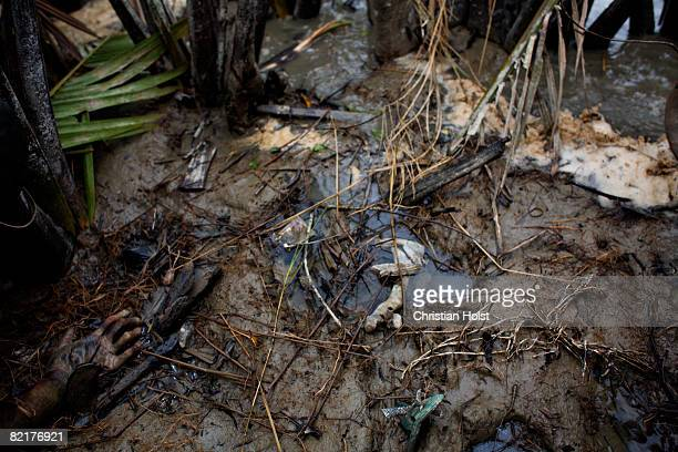 A hand of a dead body is seen in the mud close to the riverbed of the river Pyapon May 10 2008 app one hour south of Pyapon Myanmar On May 2 2008...