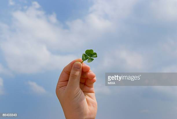 Hand of a girl holding four-leaf clover