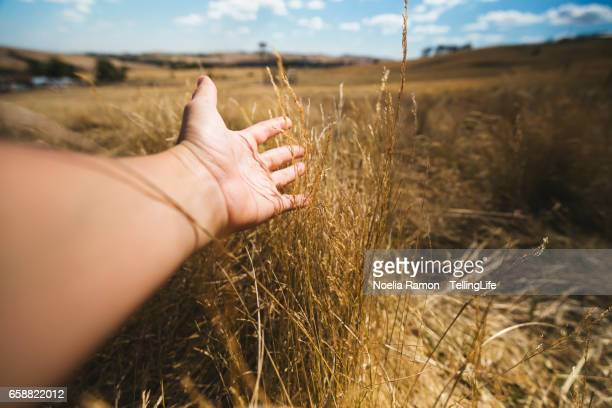 A hand of a woman touching and feeling the grass, in the countryside of Victoria, Australia