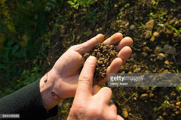 Hand of farmer holding and monitoring soil in field