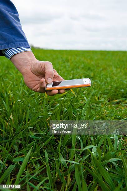 Hand of farmer photographing field crop on smartphone