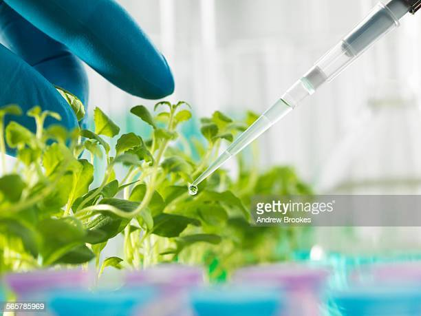 Hand of scientist pipetting experimental chemical into laboratory seedling tray