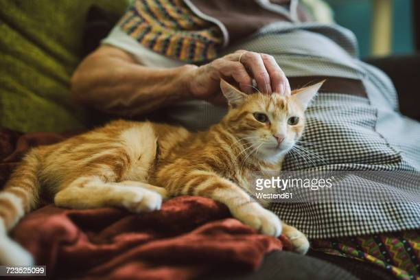 Hand of senior woman stroking tabby cat