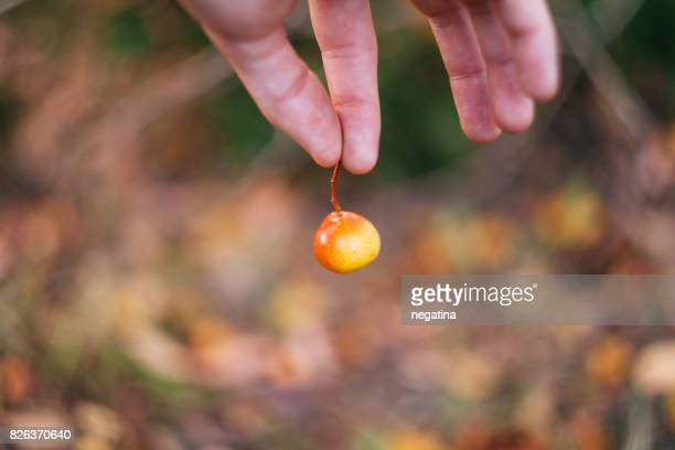 hand of young man holding apple fruit