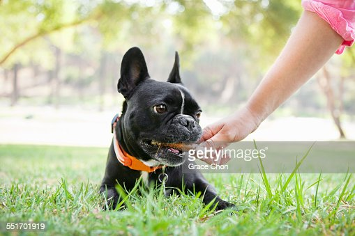 Hand of young woman giving bone to dog in park : Stock Photo