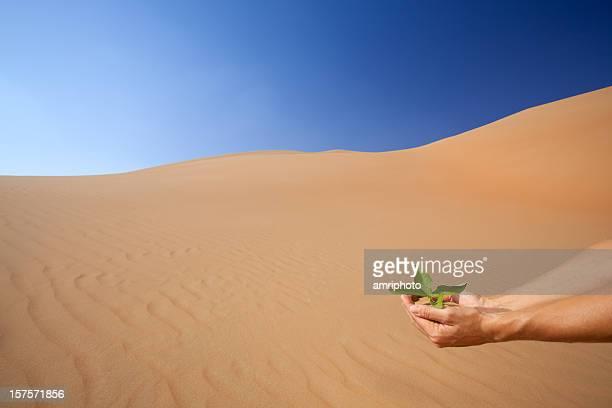Main Semer frais de green dans le désert large