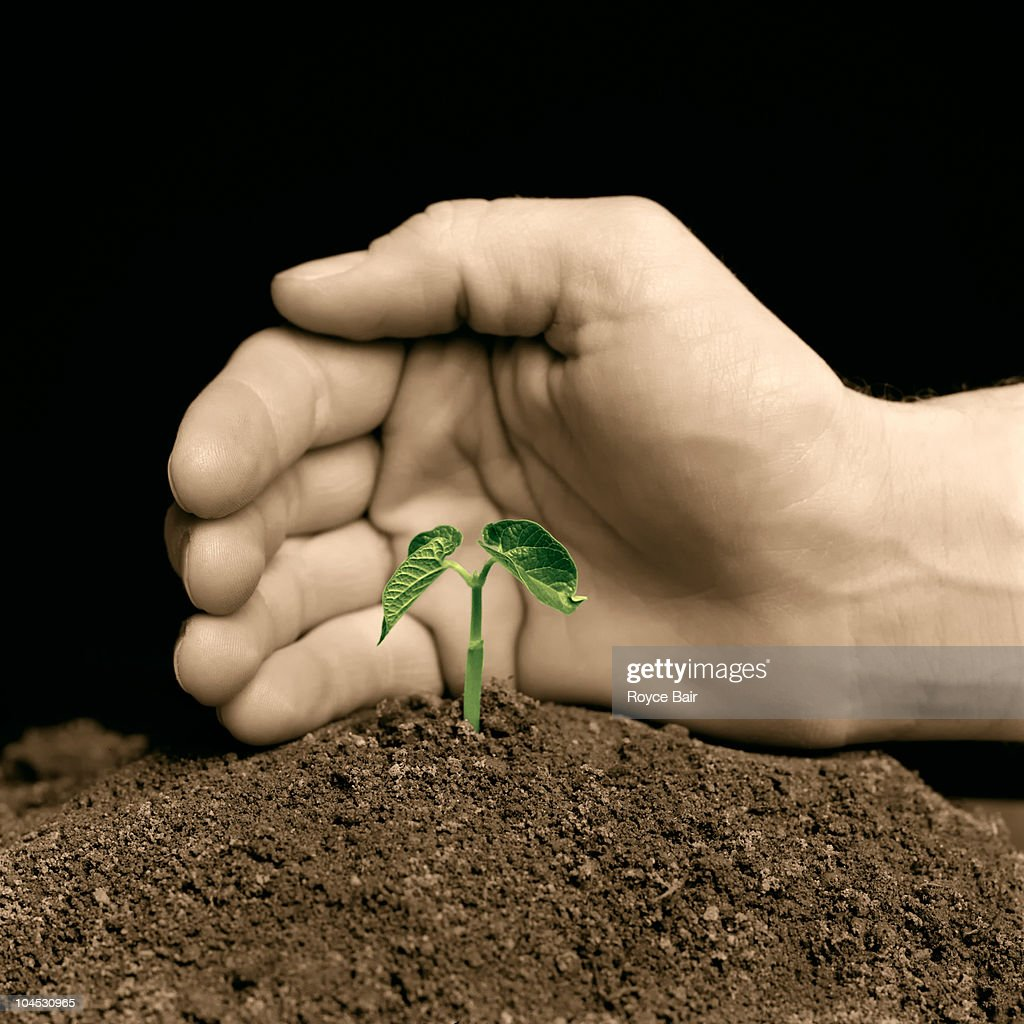 Hand Protecting a Young Plant : Stock Photo