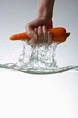 Hand pulling carrot from water