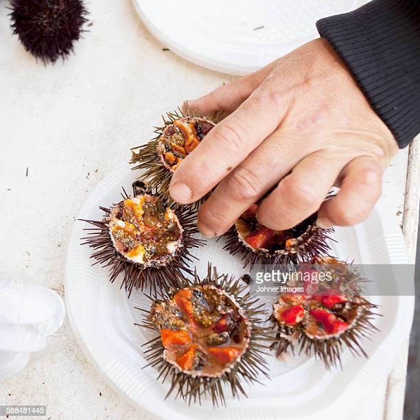 Hand putting sea urchin on plate