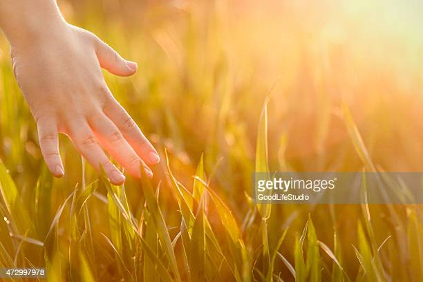 Hand reaching out to touch green grass