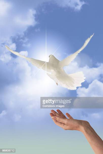 Hand releasing a dove