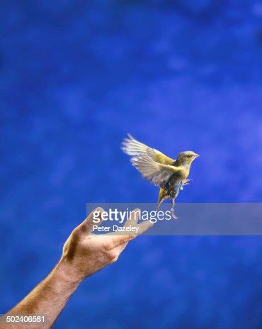 Hand releasing bird