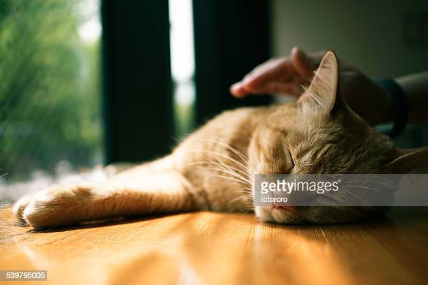 A hand stroking a sleepy cat
