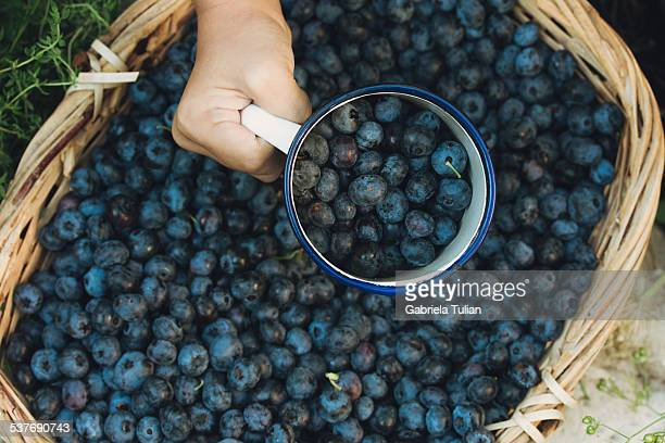 Hand taking with a cup blueberries from a basket
