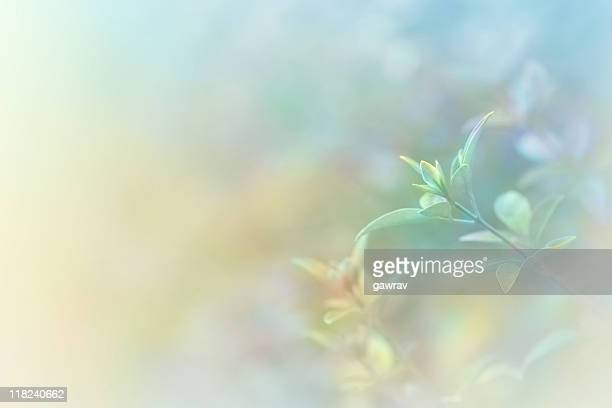 Hand Tinted Soft Nature Background