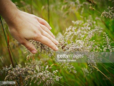 Hand touching grass : Stock Photo