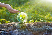 hand watering and protecting globe of young tree resting on a timber, environment concept