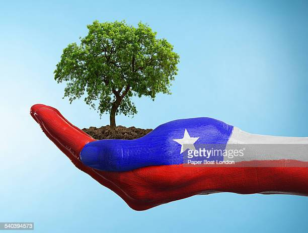 Hand with flag of Chile holding a tree