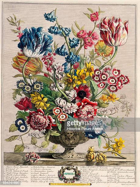 A handcolored engraving from The Twelve Months of Flowers published by Robert Furber in 1730 The engraving is after a painting by Pieter Casteels  ...