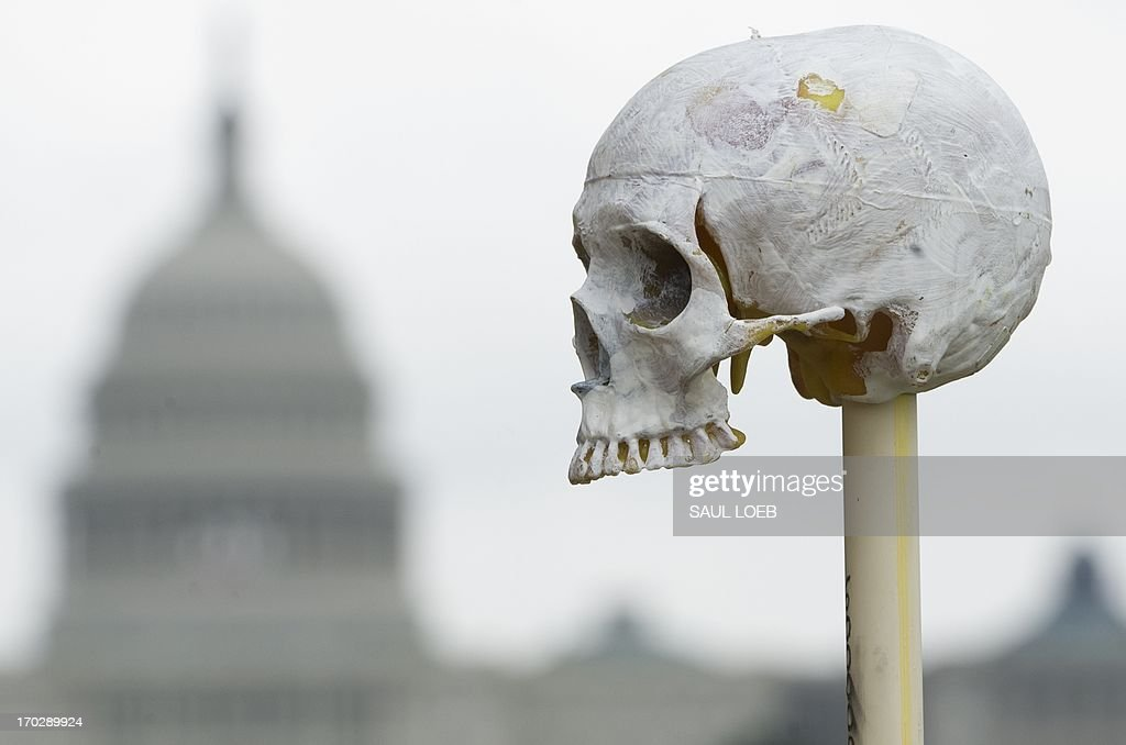 A handcrafted skull sits on a stick as part of the art installation 'One Million Bones' containing one million handcrafted bones placed as a symbolic mass grave to raise awareness of genocide and mass atrocities during a three-day event on the National Mall near the US Capitol in Washington on June 10, 2013. AFP PHOTO / Saul LOEB