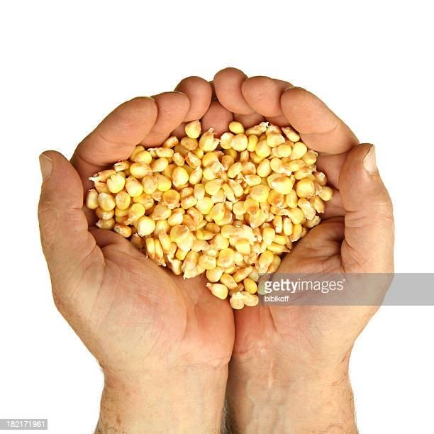 Handvoll corn