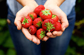 Close up portrait of handful of delicious red strawberries