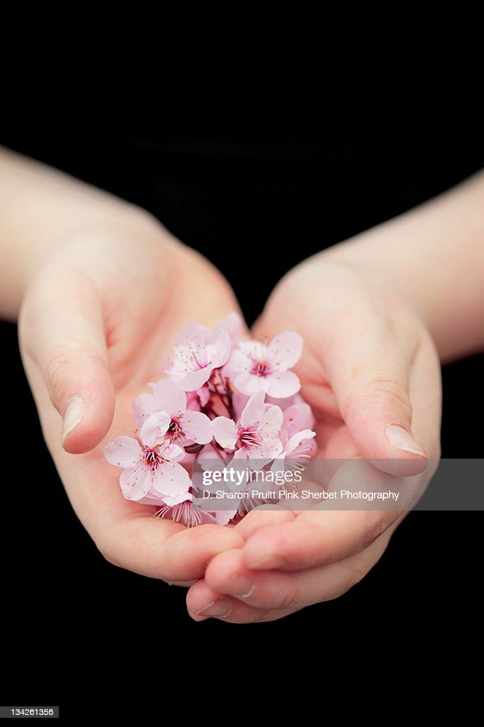 Handful of spring flowers : Stock Photo
