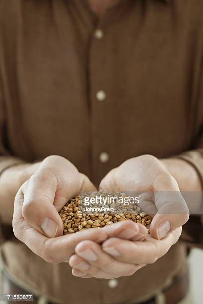 Handful of Wheat