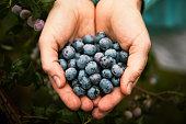 Woman holding fresh, organic blueberries.