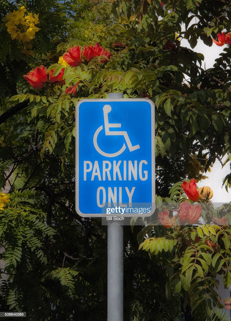 Handicap parking sign and flowering tree