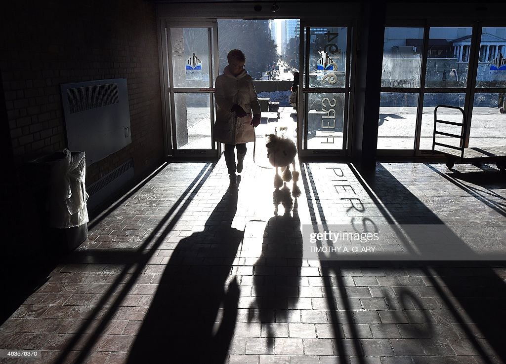 A handler and a Poodle enter the benching area at Pier 92 and 94 in New York City on the first day of competition at the 139th Annual Westminster...