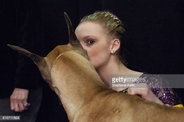 A handler gives her Great Dane a kiss before competition on the second day of the 140th annual Westminster Kennel Club Dog Show on February 16 2016...