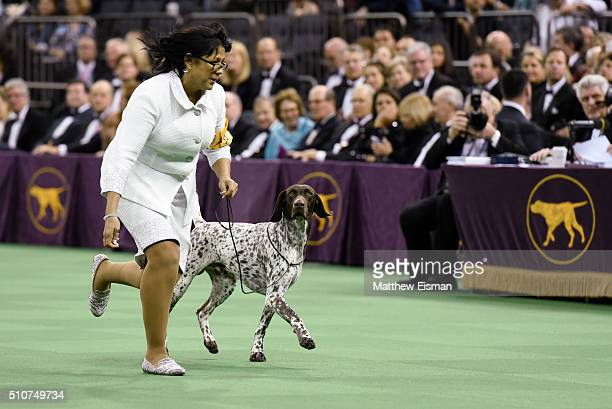 Handler Valerie NunesAtkinson and her dog CJ a German Shorthaired Pointer compete and win in the Best in Show competition at the 140th Annual...
