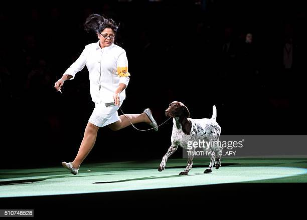Handler Valerie NunesAtkinson runs with German shorthaired pointer named CJ after he won 'Best in Show' of the 140th Annual Westminster Kennel Club...