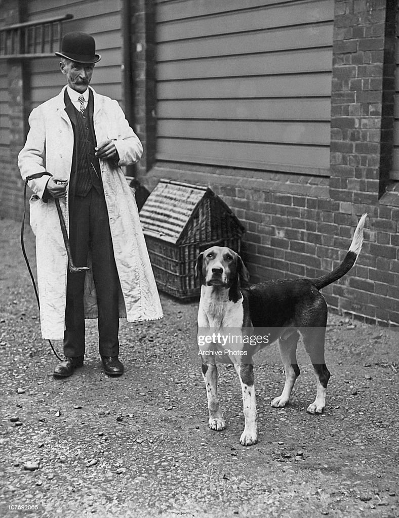 A handler with an English Foxhound named Sargeant owned by Hugh Lowther 5th Earl of Lonsdale which is being auctioned at Rugby Warwickshire circa 1920