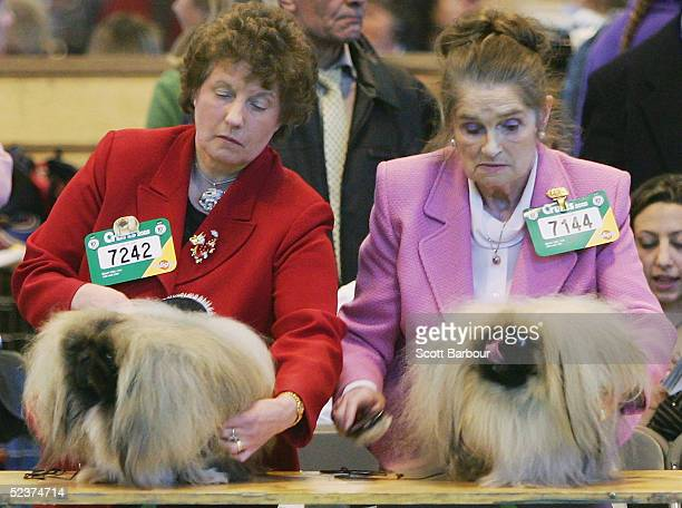 Handlers brush their Pekingese dogs being judged during the 102nd Crufts dog show on March 11 2005 in Birmingham England Over 23000 top pedigree dogs...