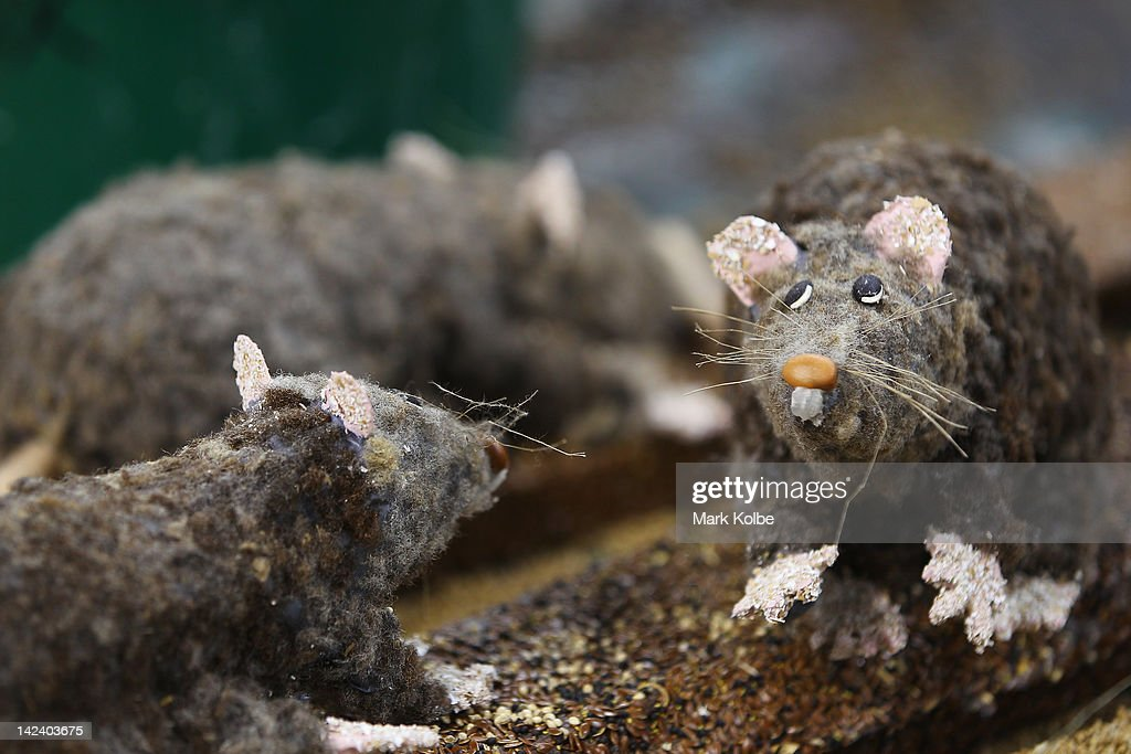 Handmade model rats are seen at the Northern District Exhibit during preparations for 2012 Sydney Royal Easter Show at the Sydney Showground on April...
