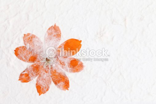 Handmade paper with pressed flower stock photo thinkstock handmade paper with pressed flower stock photo mightylinksfo