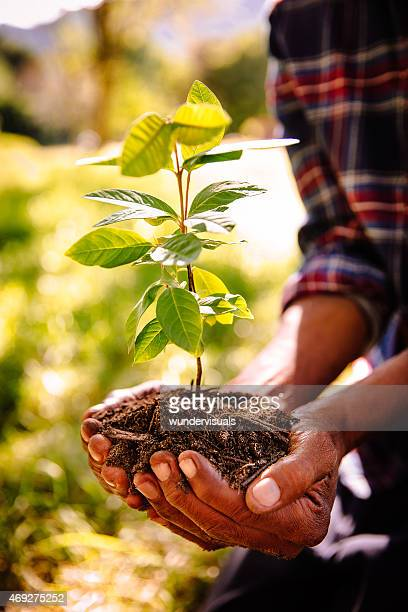 Hands carrying a sapling and fresh new earth