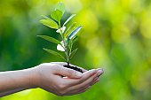 Hands cupped together holding a sprouting tree on bokeh back