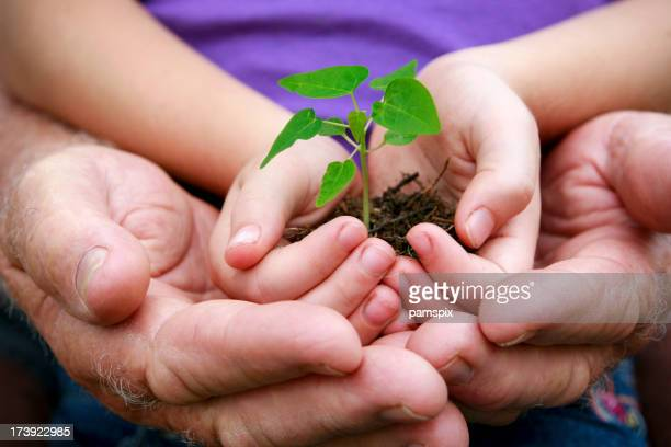 Hands cupping seedling