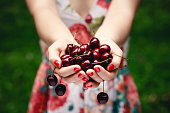 Close up of hands full of cherries. Photo with shallow depth of field.