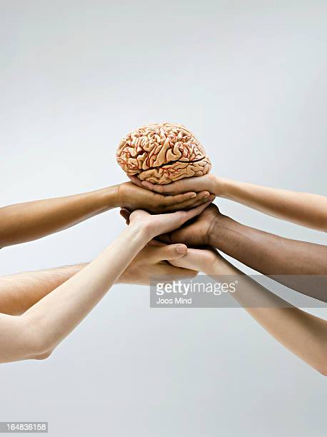 Hands holding a brain