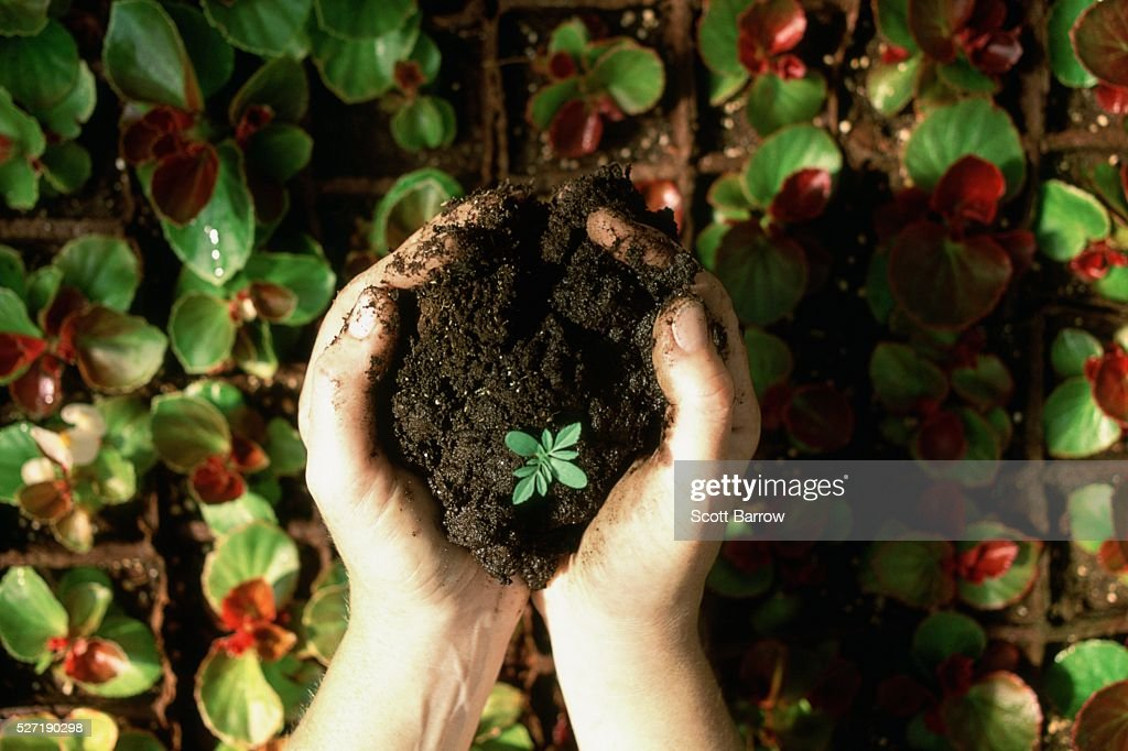 Hands holding a seedling : Stockfoto