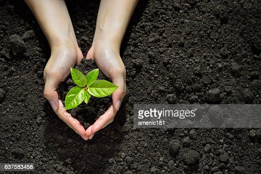 Hands holding and caring a green young plant : Stock Photo