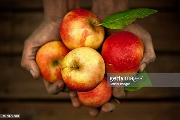 Hands holding apples, studio shot